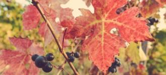 vigne-asti-1