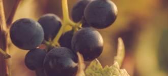 vigne-asti-12