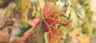 vigne-asti-2