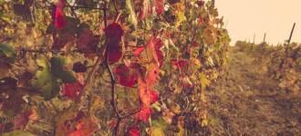 vigne-asti-7